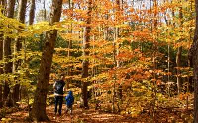 20 Family-Friendly Fall Foliage Hikes
