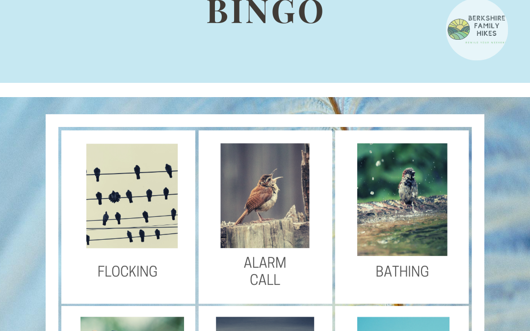 Bird Behavior Bingo