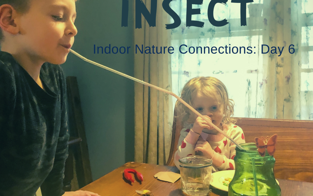 Eat Like an Insect – Indoor Nature Connection Day 6