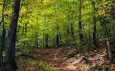 Fall Hike Activities to Shake Things Up