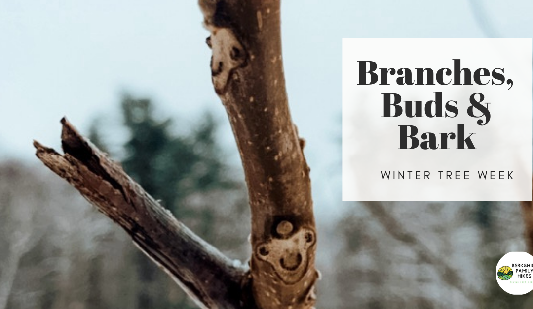 Branches, Buds, & Bark — Winter Tree Week