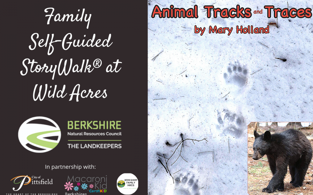 Take a Walk on the Wild Side with Berkshire Natural Resources Council