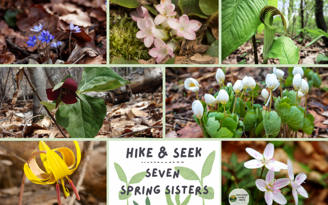 Hike & Seek the Seven Spring Sisters